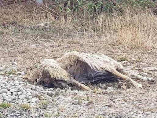 Noé: Des cadavres de Moutons à la ferme Photovoltaïque
