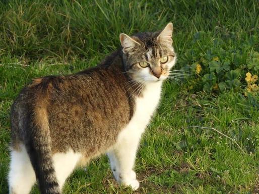 Animaux: des chiens et chats abandonnés à cause du virus