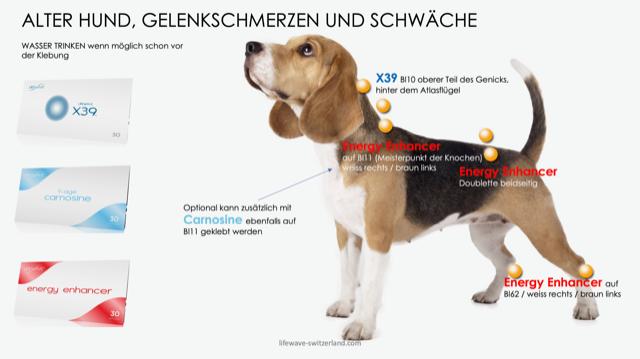 11a. nach 11 alter Hund Kopie.png