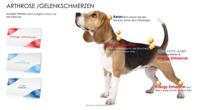 11. Arthrose : Gelenkschmerzen.png