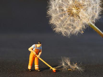 El Sentido por el Trabajo / Making Sense of Work