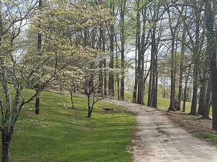 Dogwood Spring @ JMP