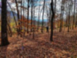 Autumn View @ JMP