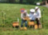 Beekeeping @ JMP