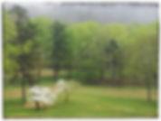 Spring Dogwoods @ JMP