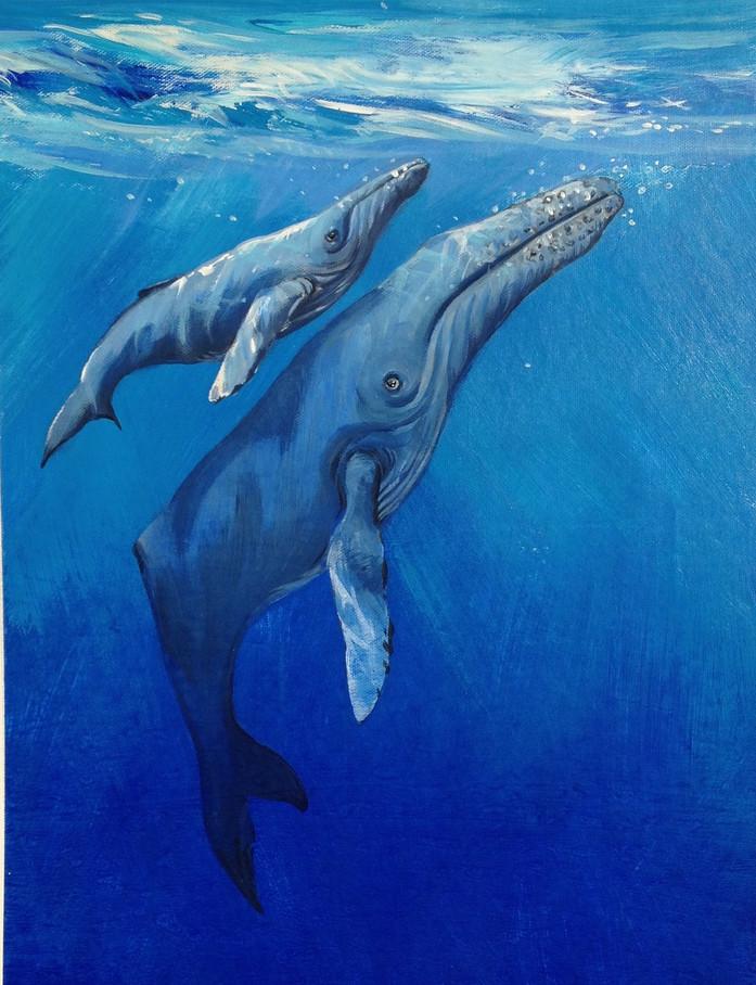 Humpback Whales I