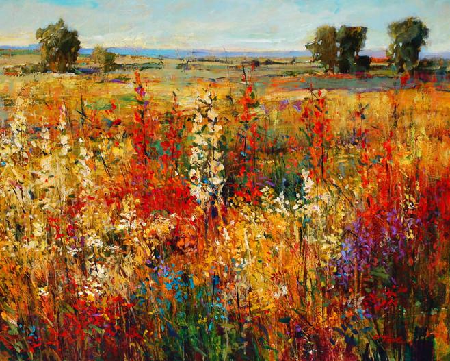 Field of Color II