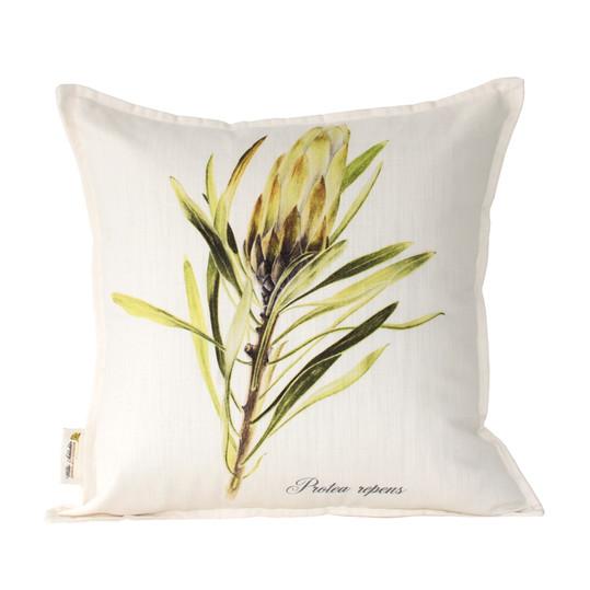 Protea repens white 45x45cm