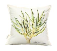 Aloe ramosissima 45x45cm