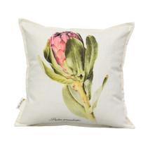 Protea grandiceps 45x45cm