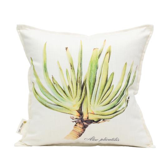 Aloe plicatilis 45x45cm