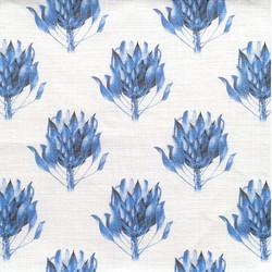 Cynaroides Blue