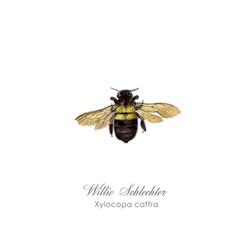 Xylocopa caffra