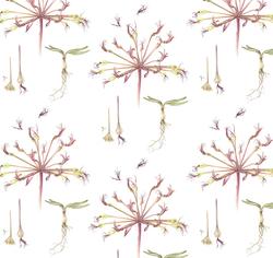Brunsvigia orientalis Colour