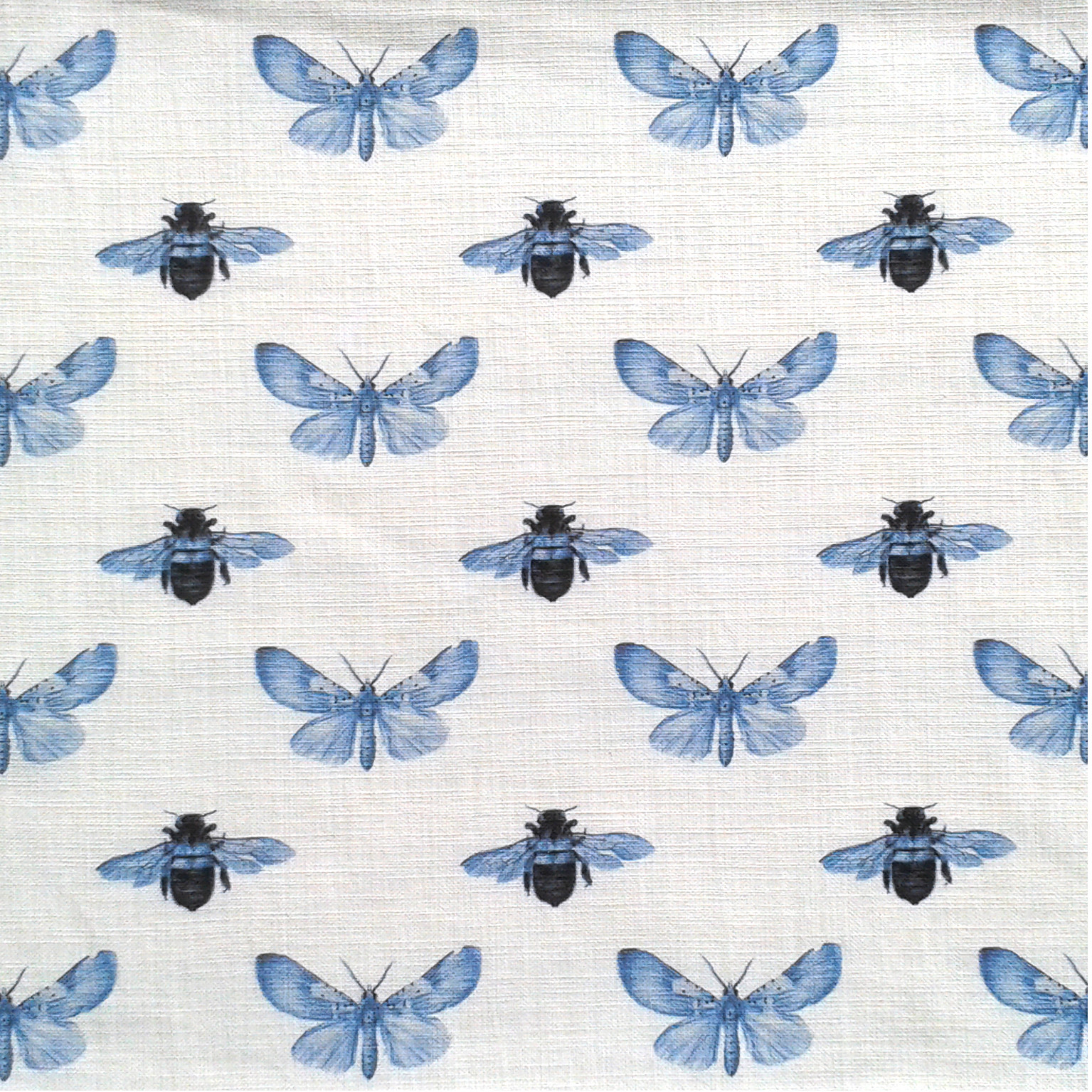 Moth and Bee Blue