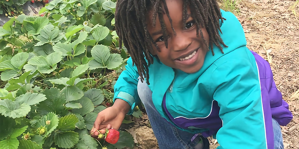 Springtime with Nubian Moon  (Field Trip -  Day 1)  Strawberry Picking