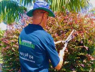 How to choose your garden maintenance company