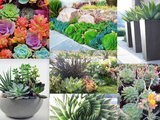 Succulents - a stylish addition to any garden