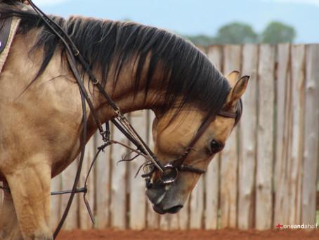 Treinar um cavalo custa caro