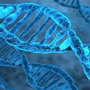 Testes genéticos já são exigência na AQHA