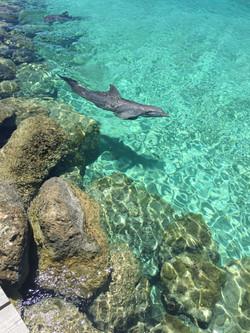 Dophin Excursion Nassau