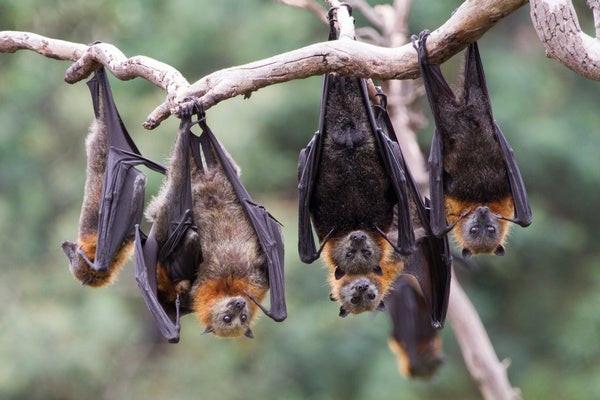 sonhar com morcegos