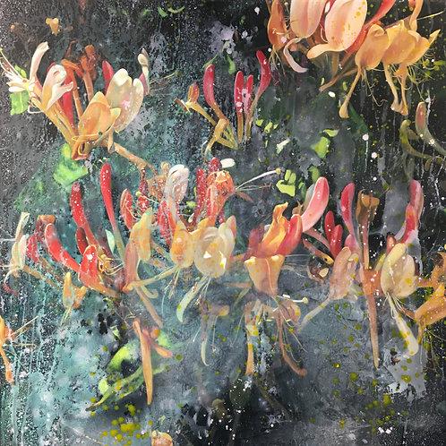 Lonicera Caprifolium 06