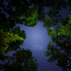 CPJ 82_La clairière étoilée