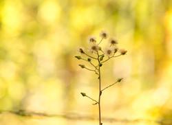 CPJ 93_Solitude d'automne