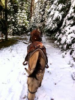 BEARCAT STABLES - HUNT TRIP