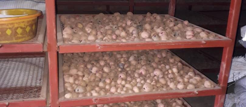 Ottimo raccolto di patate
