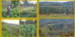 Terrazze3.jpg
