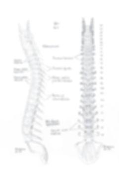 Spine sketch Bert Loeschner
