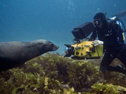 Filming Fur Seals