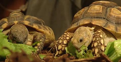 meer over schildpadden.png