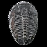 Trilobiet.png