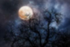 maan en bomen.jpg