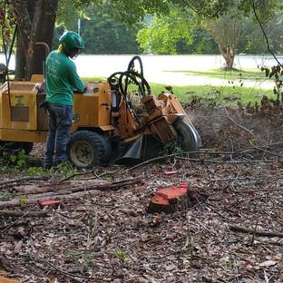 #06 - Stump Grinder at Work.jpg