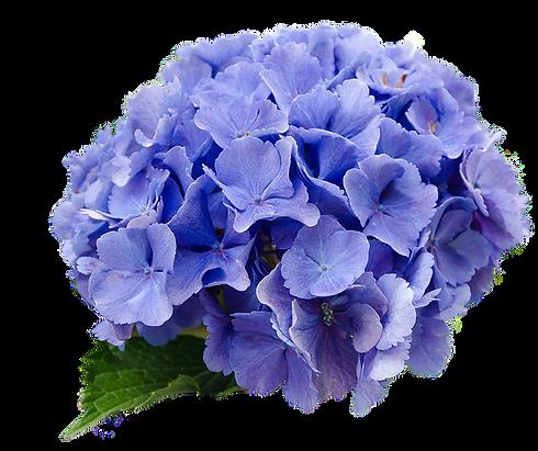flower-2980200_640_edited.png