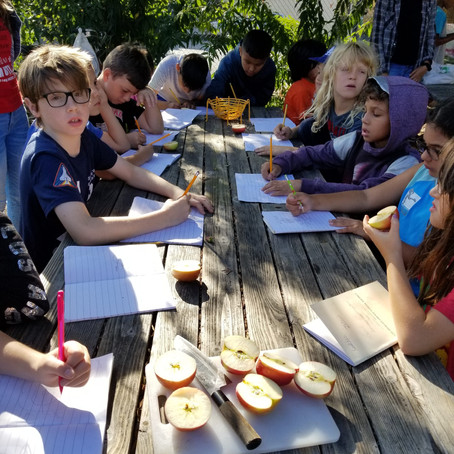 Apple Anatomy @ Micheltorena School Garden
