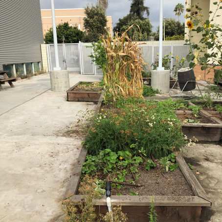 Frank Del Olmo Elementary's Sky High Garden