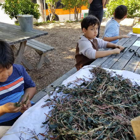 Dexterity and Patience – Learning about plants through exploration at Micheltorena