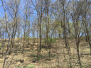 Early spring at the black locust forest of Loess Plateau