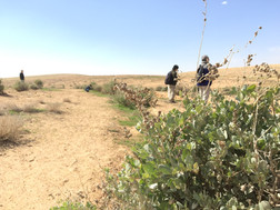 Planted trees in the degraded land of Jordan