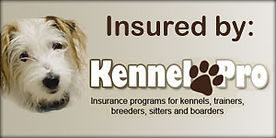 Doggy Daycare Insurance