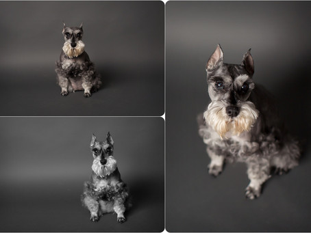 Dog Photographer – OKC – Photos by Keshia
