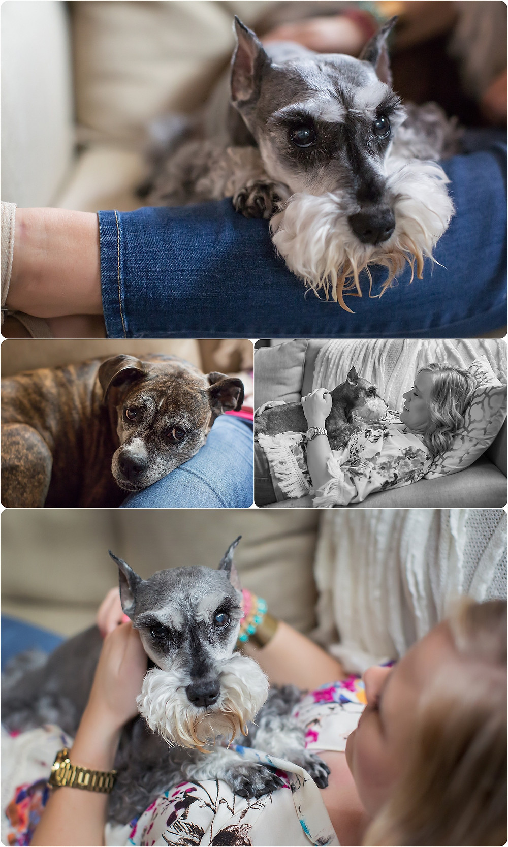 OKC Dog Photographer