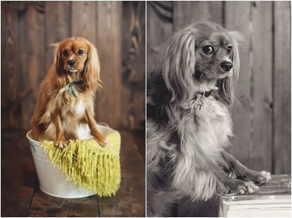 Yukon Pet Photographer – Photos by Keshia