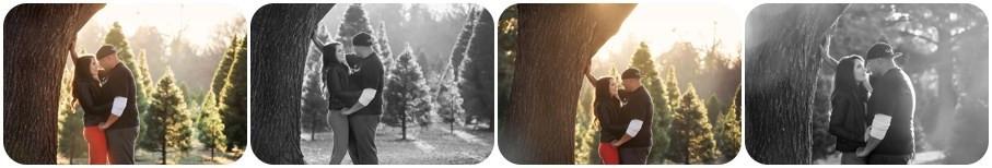 Tree farm photos near me