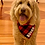 Thumbnail: Dog Bandanas